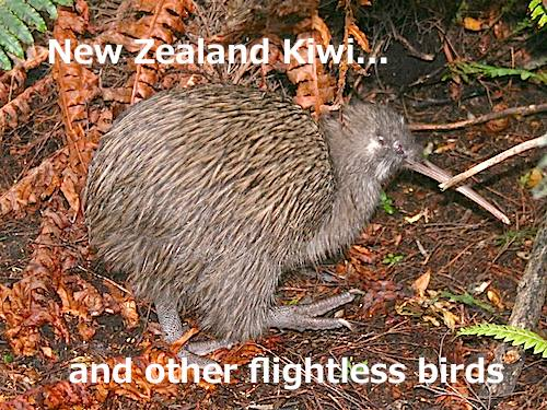 Kiwi- Kid World Citizen