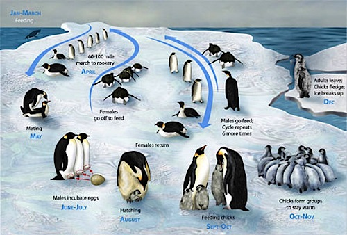 Penguins! Educational Resources for Parents and Teachers