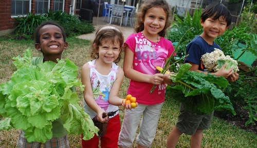 Garden Harvest- Kid World Citizen