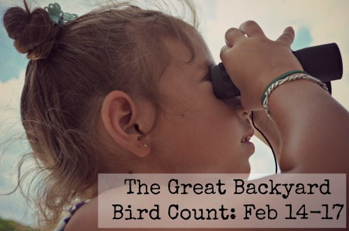 The Great Backyard Bird Count: Citizen Science for Kids